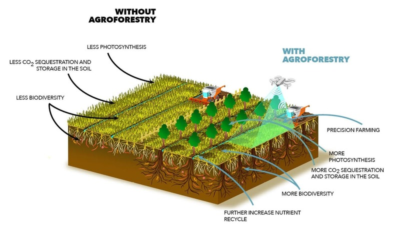 ENG - Farming for Future azione 8 - Agroforestry_web